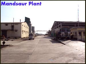 mandplant